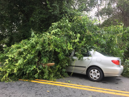 Car with fallen tree